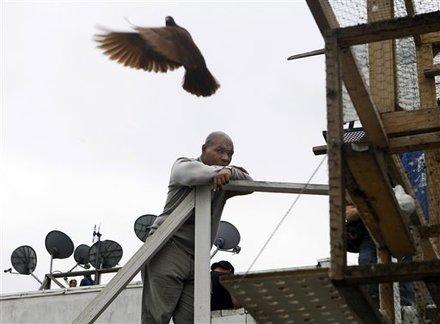 Фото майк тайсон в питомнике голубей в